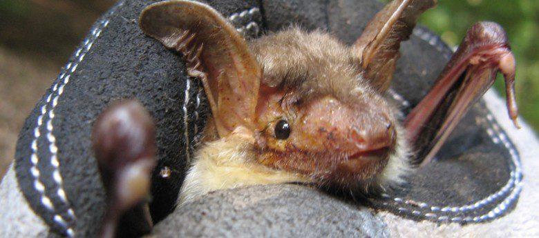 Batnight 2016: Auf der Spur der Fledermäuse