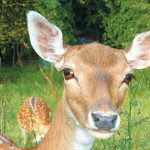Erlebniswald Historischer Tiergarten Siegen