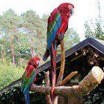 Vogel- und NaturschutzTierpark Herborn