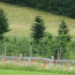 Vielfalt Wald Lennestadt-Oberelspe