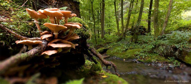 """Naturführung """"Pilze"""" ausgebucht"""
