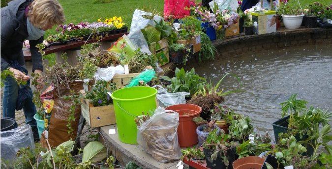 Gartensaison beginnt mit Pflanzentauschbörse der Kolpingfamilie