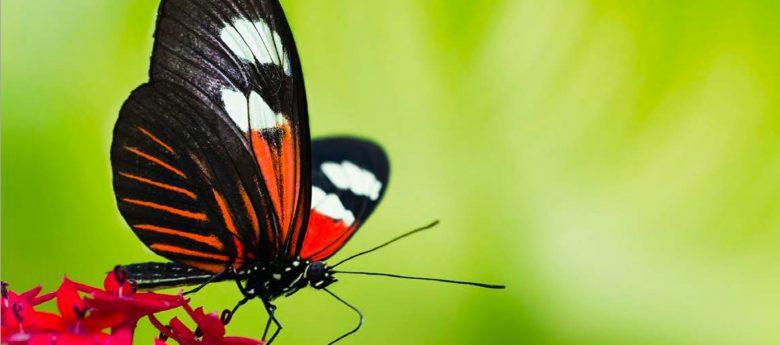 Olpe biologisch 2018 mit neuem Programm