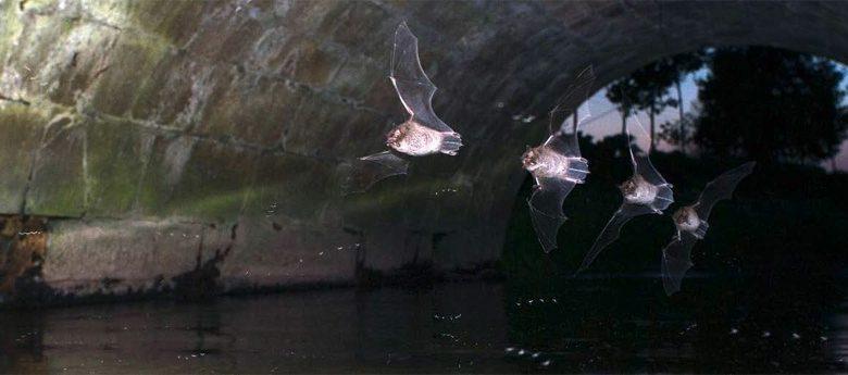 22. Europäische Fledermausnacht in Olpe