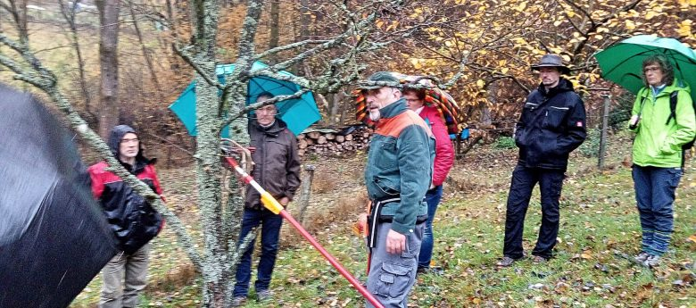 Obstbaumschnitt: Friedhelm Geldsetzer zeigte den richtigen Schnitt