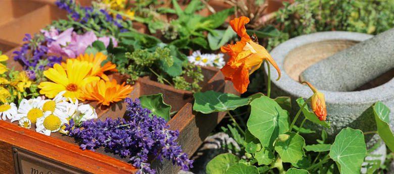 Haus- und Heilmittel aus dem eigenen Garten
