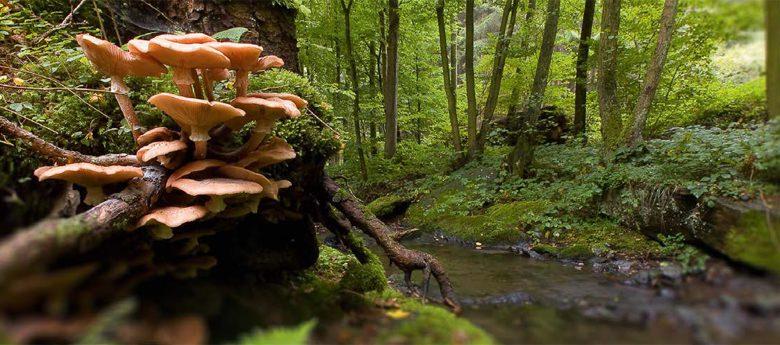 (Entfällt!) Pilze – Naturführung