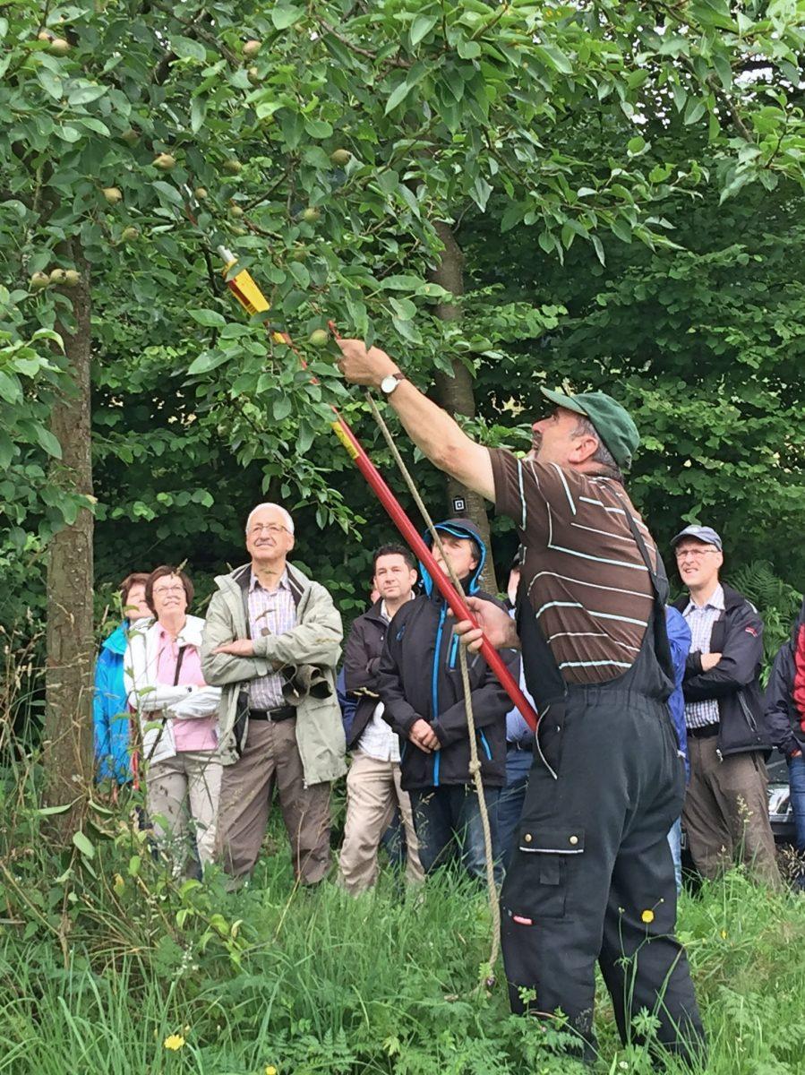 Olpe biologisch Kurs - Obstbaum schnitt