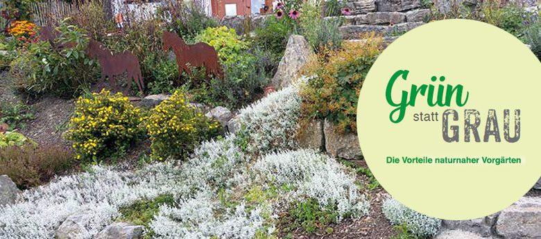 Grün statt GRAU: Die Vorteile naturnaher Vorgärten