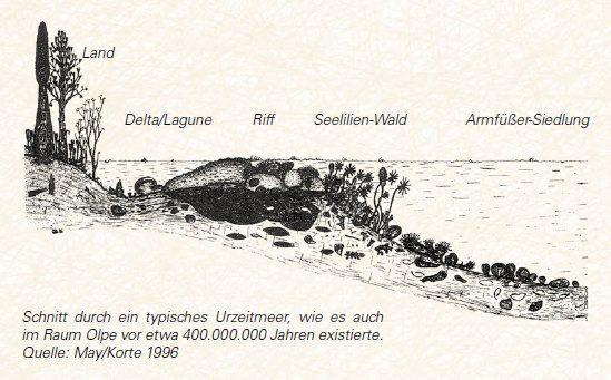 Schnitt durch ein typisches Urzeitmeer, wie es auch im Raum Olpe vor etwa 400.000.000 Jahren existierte. Quelle: May/Korte 1996